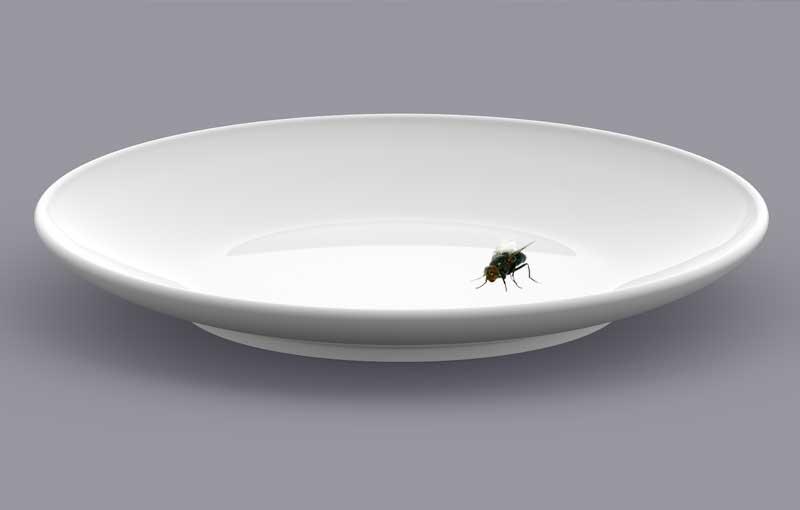 Las moscas domésticas NO transmiten la COVID-19