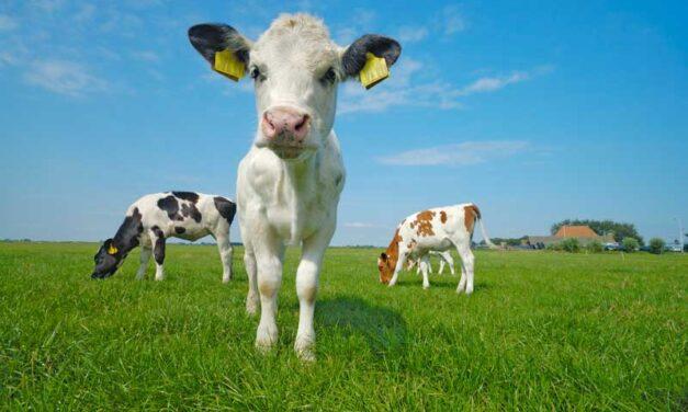 ¿Qué relación hay entre la COVID-19 y los animales?